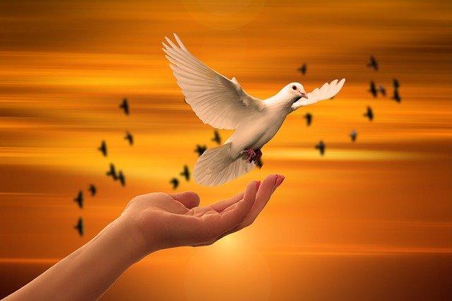 Die Taube als Überbringer deiner Glaubenssätze